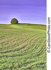 Lone tree - Lone Tree on a meadow in landscape