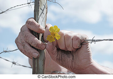 Hands Holding Yellow Flowers and Barbed Wire Fence - Close...