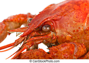 Crayfish head closeup Shallow DOF Focused on the eye