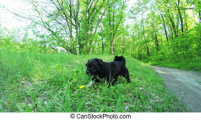 Dog in nature - Black dog on green grass in nature