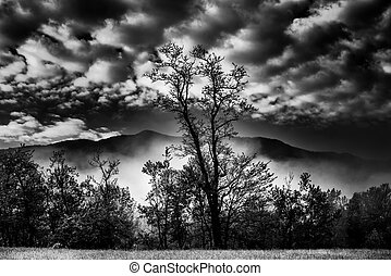 First Light in Cades Cove - Early morning view of misty...