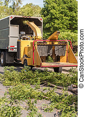 Wood chipper machine works on Redwood branches
