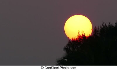 large sun sets behind tree - telephoto - large sun sets...