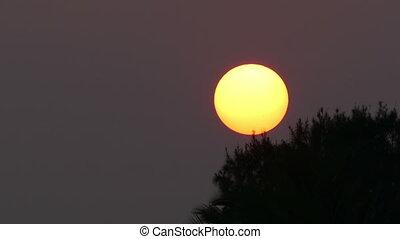 large sun sets behind tree - telephoto timelapse - large sun...