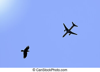 Meeting in the sky of plane and ravens.
