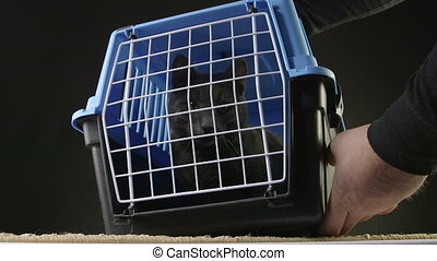Owner opening the door of pet cage carrier with a gray cat...