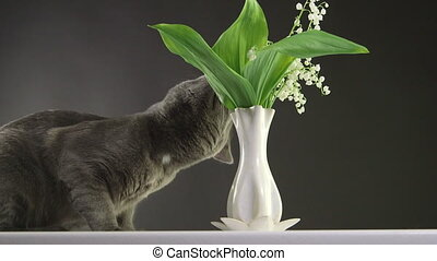 Cat trying to eat lily of the valley at home most toxic...