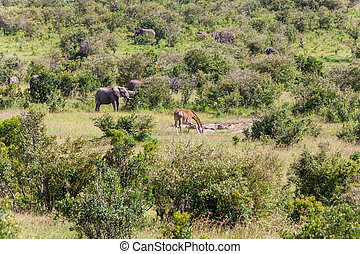 elephant family and giraffe walking in the savanna - African...