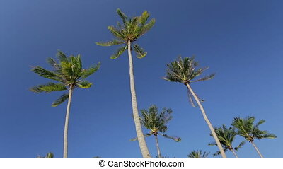 Swaying palm trees against the blue