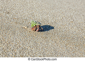 hermit crab on the beach on sand backgroundClose-up