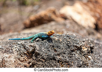 yellow and green lizard against the background of stone