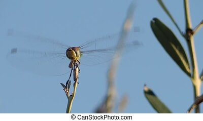 a dragonfly alighting on a twig - Insects world Beautiful...