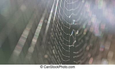 Spiders web in slow motion - Closeup of a spiders web in...