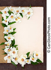 Philadelphus Flowers - Philadelphus mock orange flower...