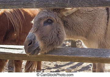 Cute Donkey - Cute donkey sticks its head between the wooden...