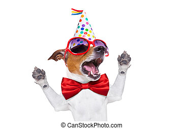 happy birthday dog singing - jack russell dog as a surprise,...