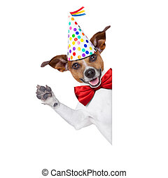 happy birthday dog - jack russell dog as a surprise, behind...