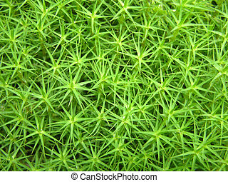 Closeup view on a green moss as background