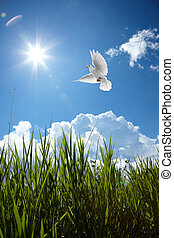 clear sky - scenic of sky with dove and grass
