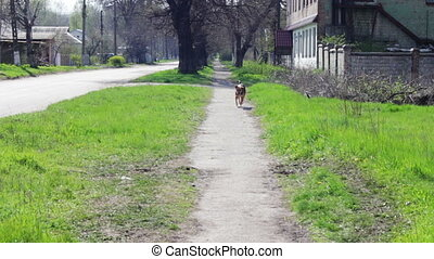 Yard, stray dogs running down the street. - Dog running...