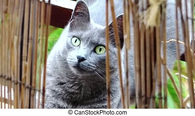 gray cat portrait - beautiful cat close up