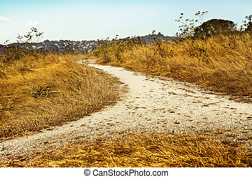 Empty countryside road through fields with wheat, Autumn day, fall landscape