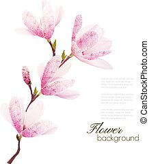 Flower background with blossom branch of pink flowers. Vector