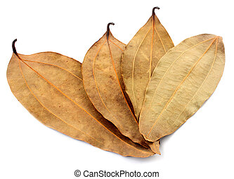 Dried cassia leaf over white background
