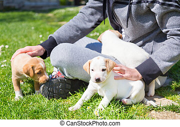 Mixed-breed cute little puppy in lap. - Mixed-breed adorable...