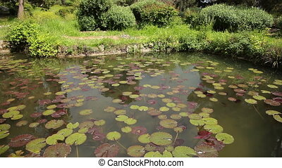 Pond With Water Lilies, Spring Park