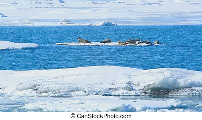 Seals swimming on an ice floe part1 - Several seals swimming...