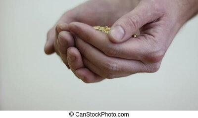 grain in the hands of a farmer 02