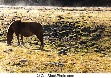 One horse - One brown horse on the meadow in Andorra