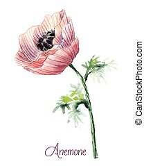 Delicate watercolor anemone - Pink delicate beautiful...