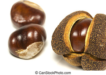 Autumn conkers Horse chestnuts - A conker in its opening...