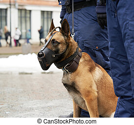Border security dog composition - Border security dog in...