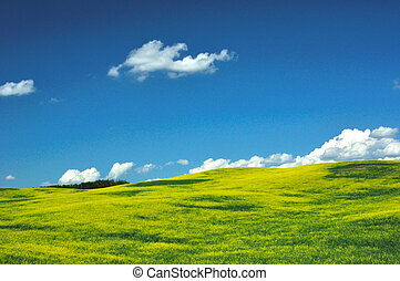 CRANOLA IN FIELD ALBERTA