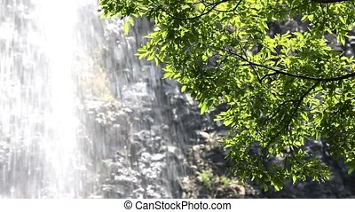 green leaves with waterfall in the background