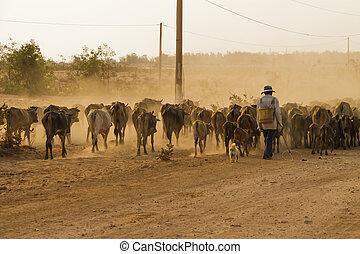 pastor, pastor, ganado, en, Zona lateral de camino, en,...