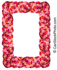 Fresh pink roses frame border isolated on white background