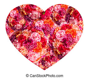 pink roses Heart form isolated on white background