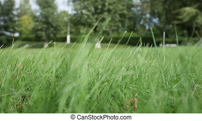 wind shakes green grass in field against trees