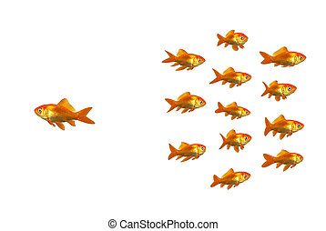 Wondering goldfish - A goldfish going off with his own ideas