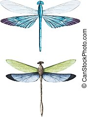 Watercolor dragonflies - Beautiful vector image with nice...