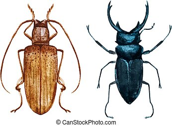 Watercolor bug beetle