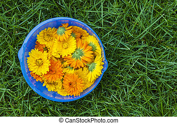 Calendula flowers in a bowl
