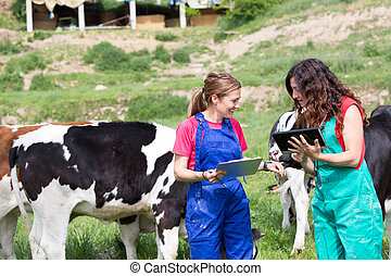 Veterinary on a farm performing a physical examination in a...