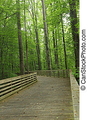 Trail Through Nature Preservea - Wooden trail in...