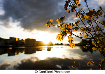 Sunset over city by water, with back lit fresh maple leaves...