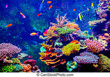 Singapore aquarium - Coral Reef and Tropical Fish in...